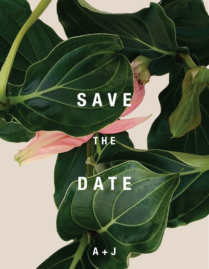 Medinilla - Save The Date
