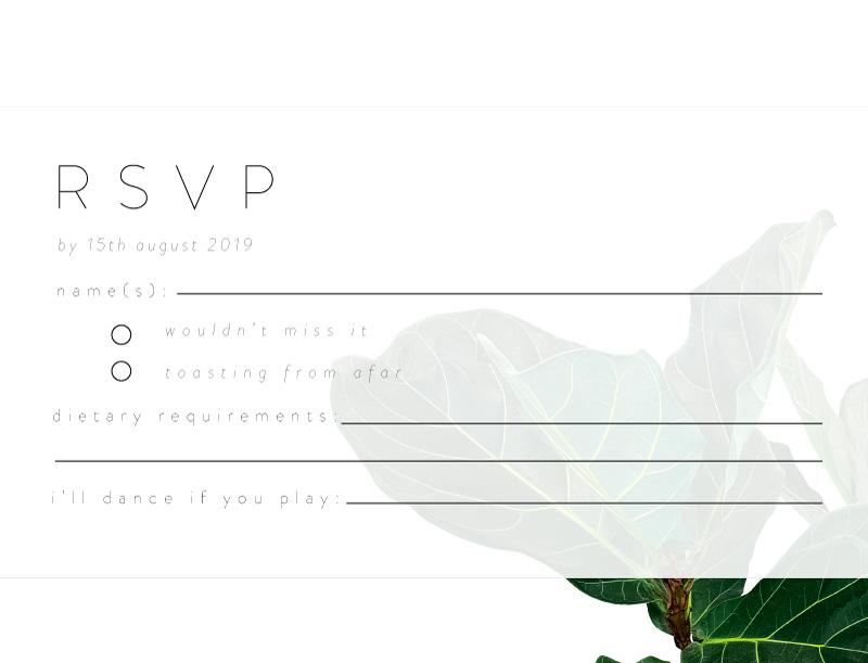 Fiddle Leaf Fig - Rsvp