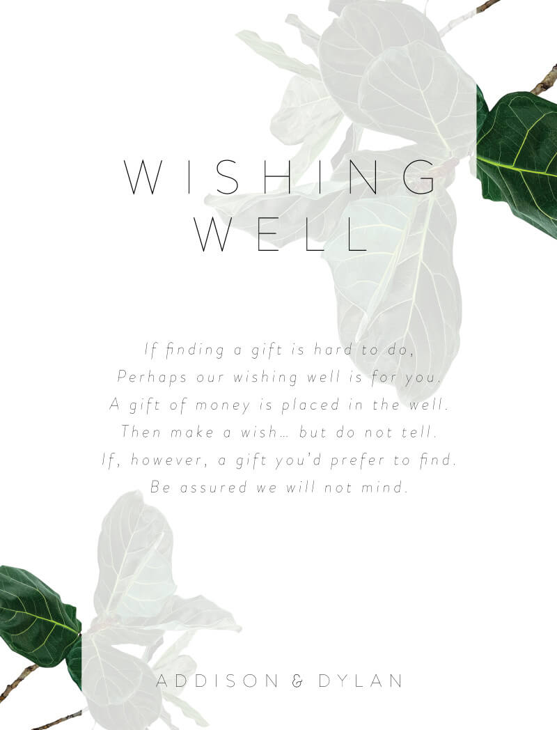 Fiddle Leaf Fig - Wishing Well