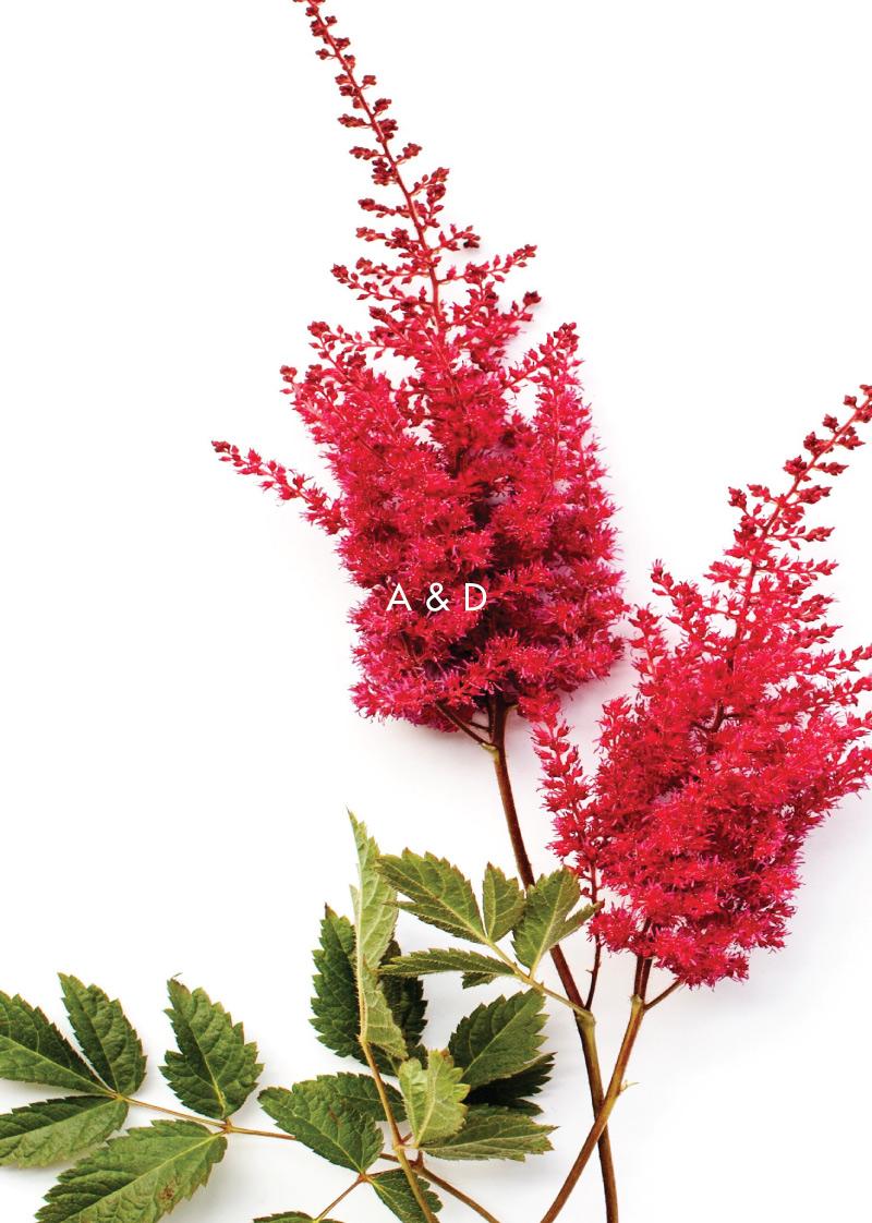 Blooming Red | Digital Printing | Wedding Invitations