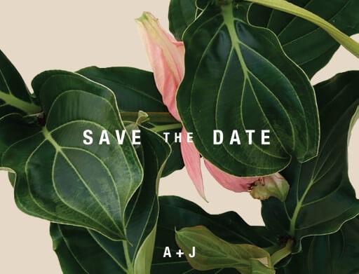 Medinilla - Save The Date